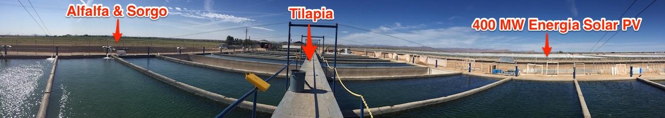 Fish-alfafa-solar-Farms-1300x231