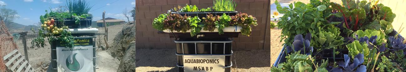 MSABP_aquabioponics3a